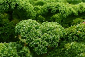 Kale and Its Cholesterol Reduction Benefits